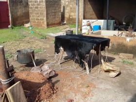 La peau de chèvre avant moulage